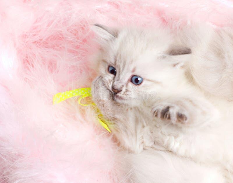 Closeup portrait of a amusing kitten royalty free stock photography