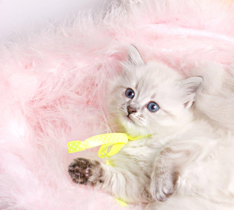 Closeup portrait of a beautiful kitten stock photo