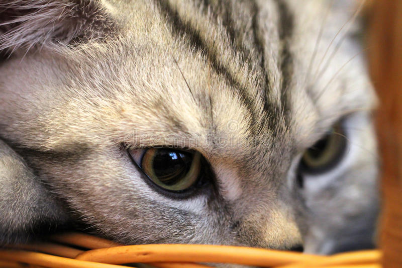 Closeup portrait of cat in the backet.  royalty free stock photo