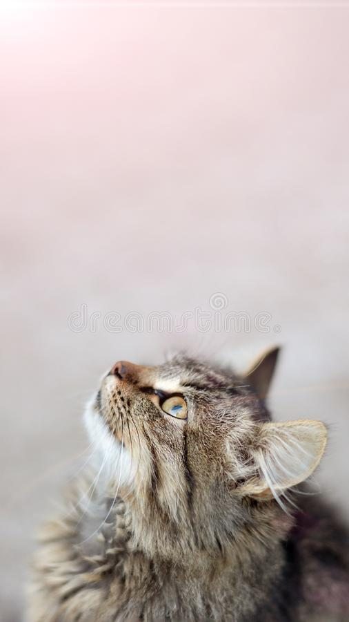Closeup portrait of a cat with a blurred background shows the emotion of surprise. Copy space, toning. Closeup portrait of a cat with a blurred background shows stock image