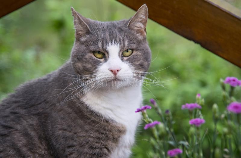 Closeup portrait of a cat in the garden. Closeup portrait of a cat with flowers stock image