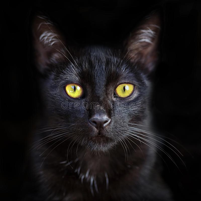 Closeup portrait of cute black cat with yellow eyes, domestic pet. Closeup portrait of cute black cat with yellow eyes, domestic pet stock photos