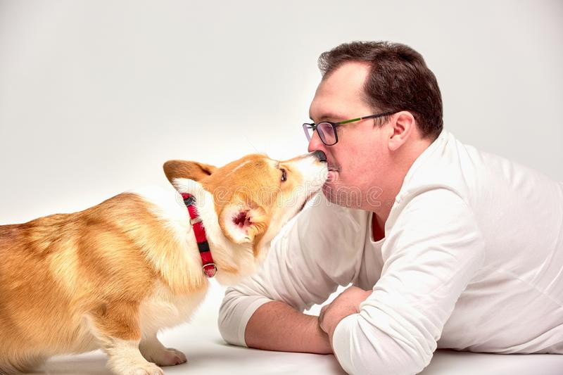 Closeup portrait of cute puppy of welsh corgi pembroce and man playing on the floor royalty free stock image