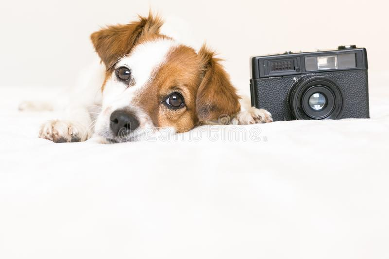 closeup portrait of a cute small dog sitting on bed with a black vintage camera. Pets indoors stock image