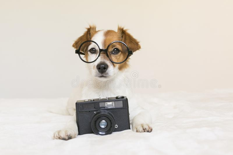 Closeup portrait of a cute small dog sitting on bed with modern glasses and a black vintage camera. Pets indoors.  royalty free stock photography