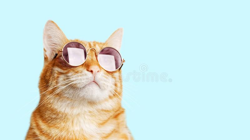 Closeup portrait of funny ginger cat wearing sunglasses isolated on light cyan. Copyspace stock image