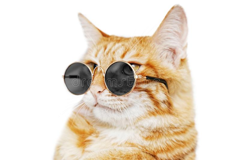 Closeup portrait of funny ginger cat wearing sunglasses stock images