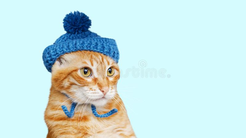Cute Cat In A Knitted Hat Stock Image Image Of Precious