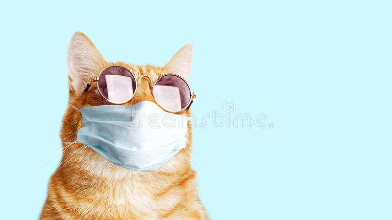 Closeup portrait of ginger cat wearing sunglasses and protective medical mask isolated on light cyan. Copyspace stock photos