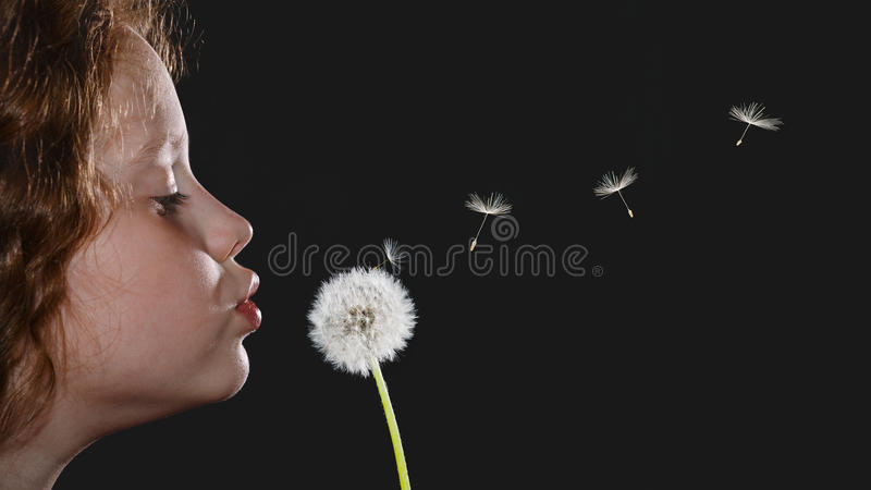 Closeup portrait little girl blowing dandelion head and flying s stock photo