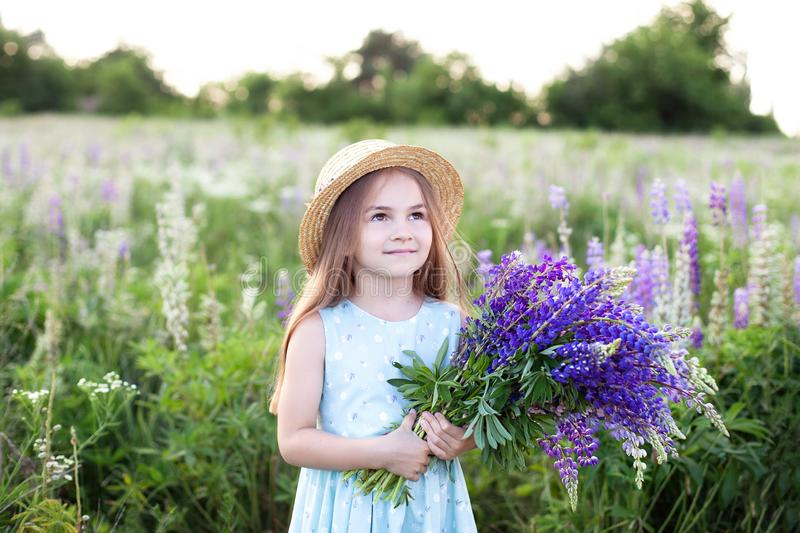 Closeup portrait of a little girl in a field of lupins. Girl holding a bouquet of purple flowers in the background of a field of l royalty free stock photo
