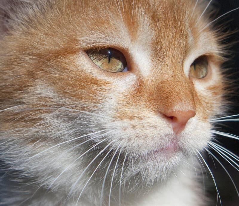 Closeup Portrait of an Orange Kitten Outdoor stock photos