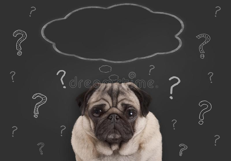 Closeup of pug puppy dog sitting in front of blackboard sign with question marks and blank thought bubble stock photos