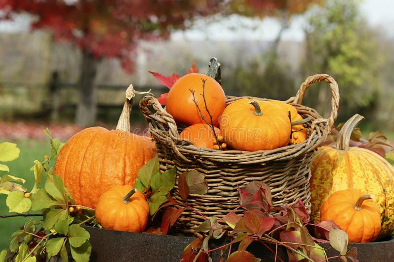 Closeup of pumpkins and gourds on old barrel stock images