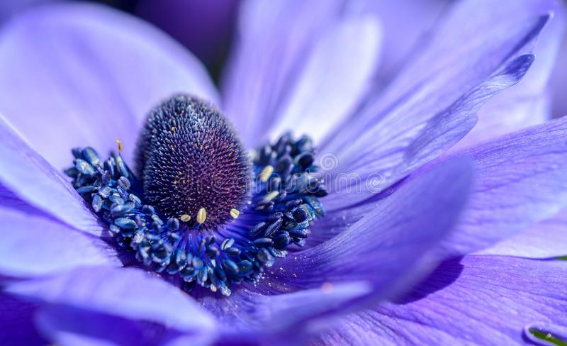 Closeup Of Purple Flower stock photography