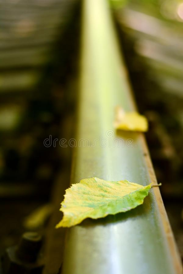 Closeup of Rail tracks with fallen autumn leafs. Rails in autumn. Autumn leaf. On train rail royalty free stock photo