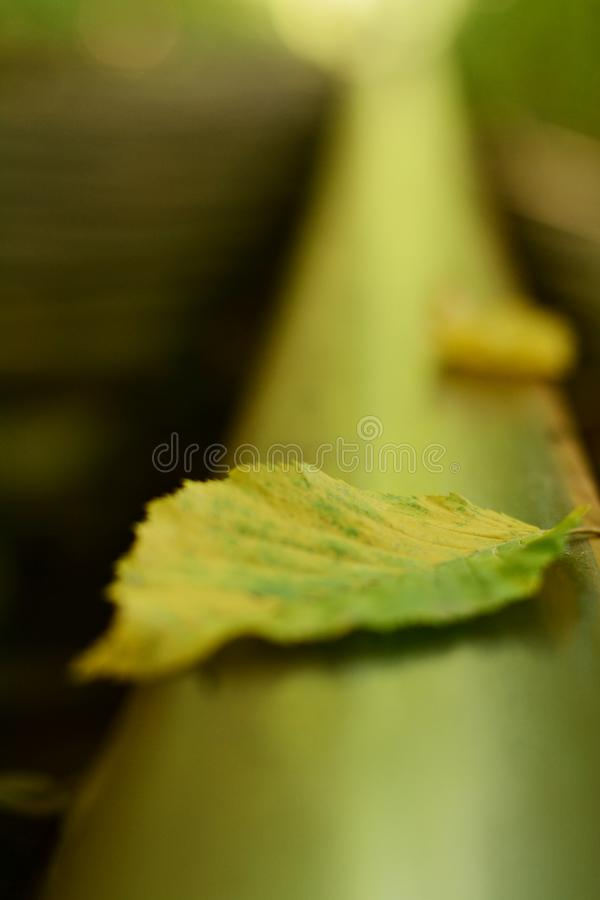 Closeup of Rail tracks with fallen autumn leafs. Rails in autumn. Autumn leaf. On train rail stock images