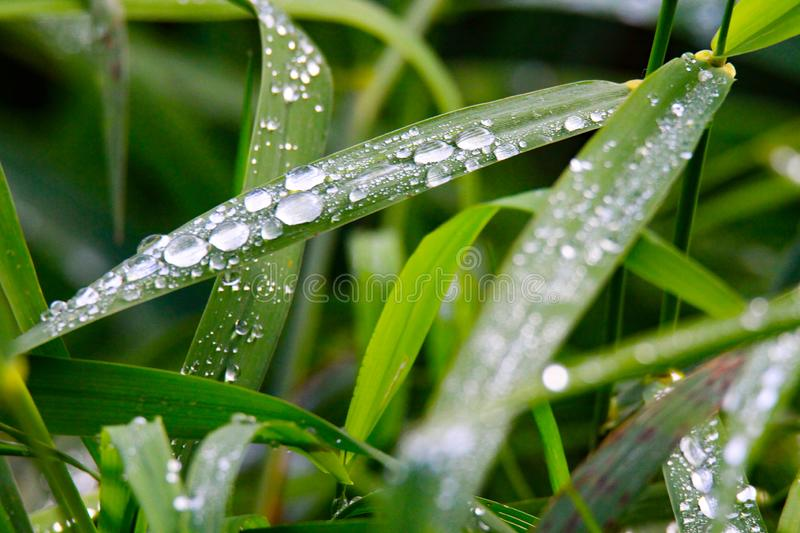 Closeup of raindrops on green grass meadow in Brüggen, Germany stock photos