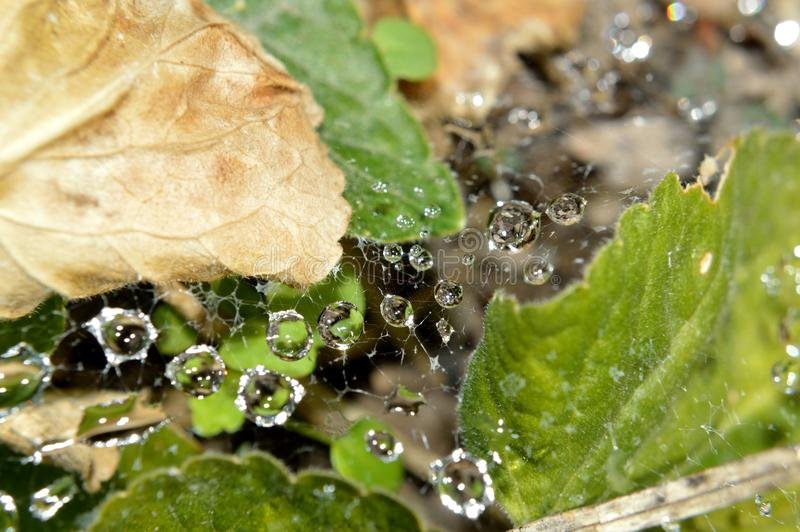 Download Closeup Of Raindrops In Web Stock Image - Image of leaf, thetinyphotographer: 107919149