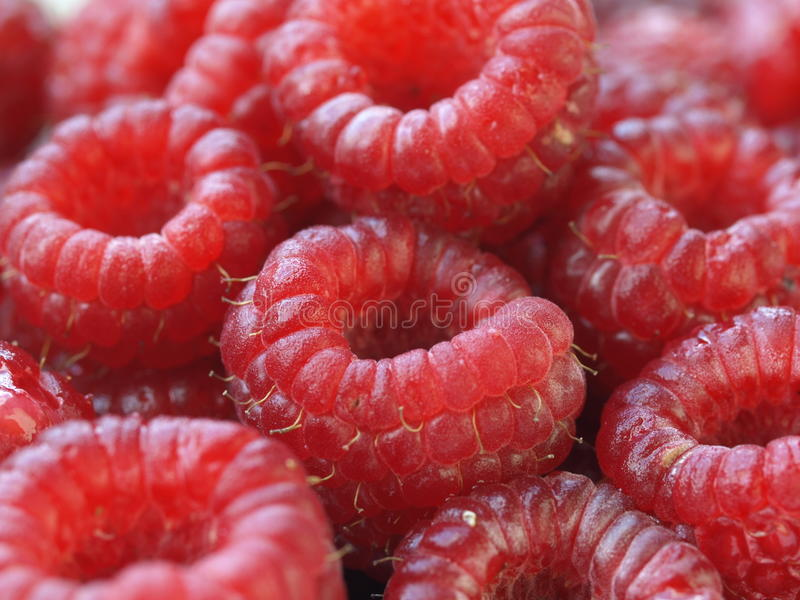 Closeup Of Raspberries Stock Image