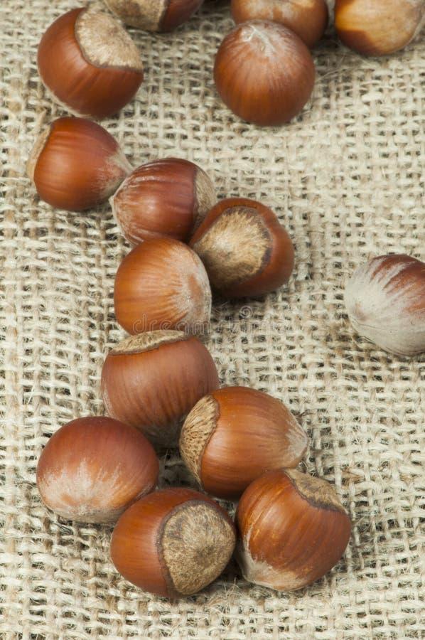 Download Closeup Raw Hazelnuts On Burlap Stock Photo - Image: 28868880