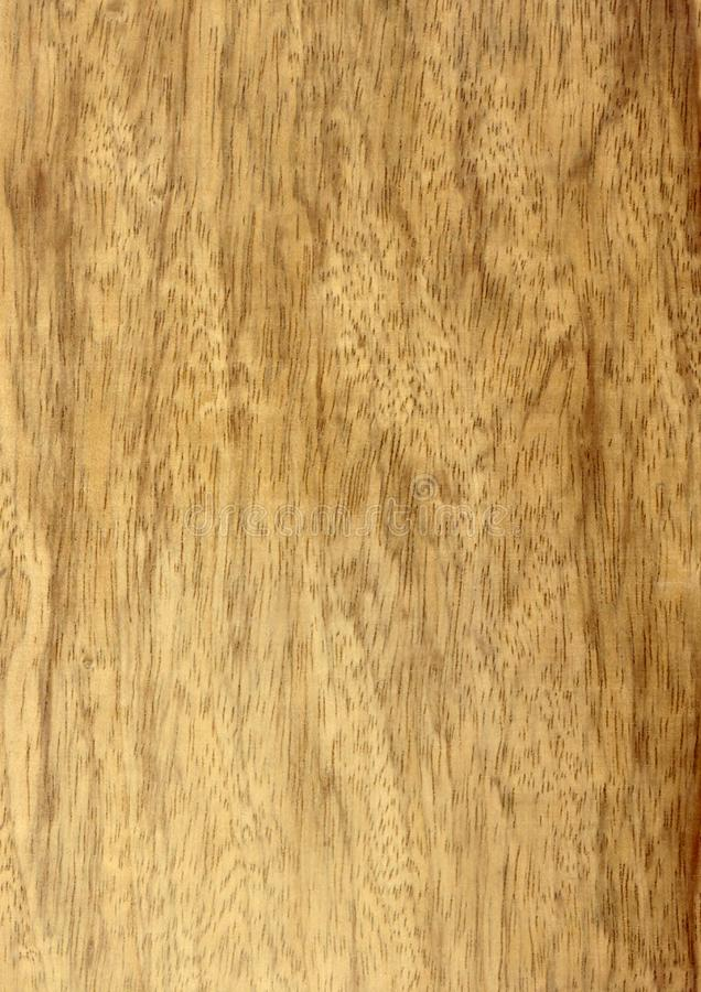 Closeup real natural wood grain of veneer background and texture, Pattern for decoration. Blank for design. Use for select material idea decorative furniture stock photography