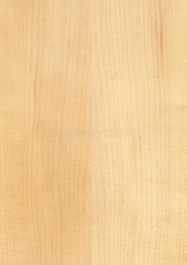 Closeup real natural wood grain of veneer background and texture, Pattern for decoration. Blank for design. Use for select material idea decorative furniture royalty free stock photography