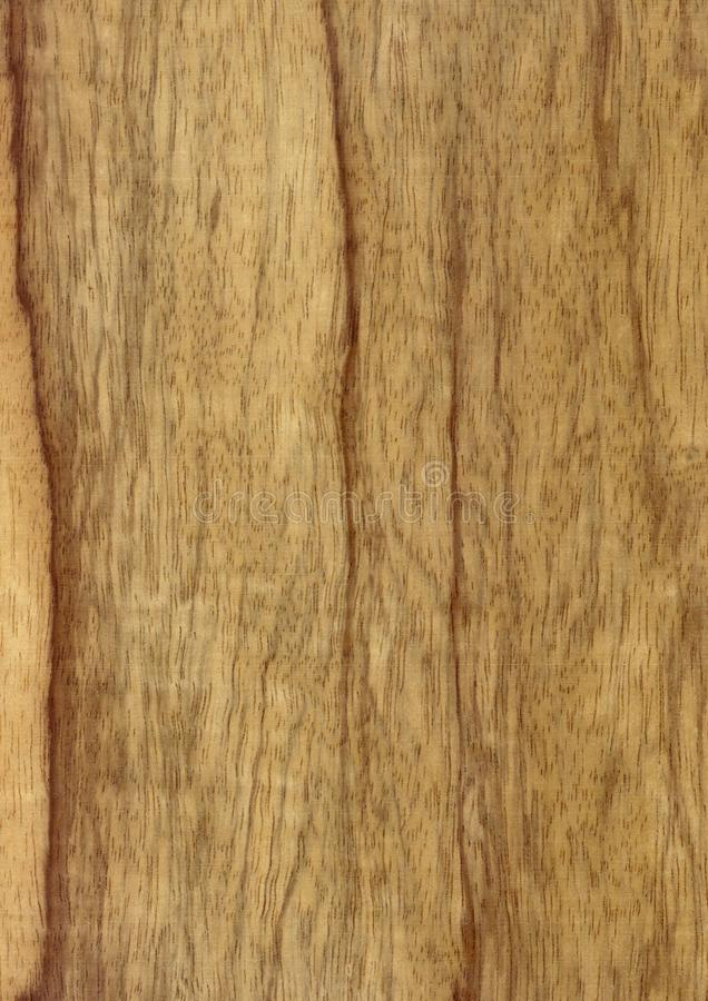 Closeup real natural wood grain of veneer background and texture, Pattern for decoration. Blank for design. Use for select material idea decorative furniture royalty free stock images