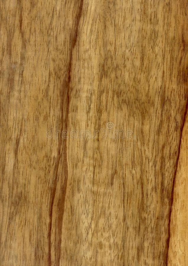 Closeup real natural wood grain of veneer background and texture, Pattern for decoration. Blank for design. Use for select material idea decorative furniture royalty free stock photo