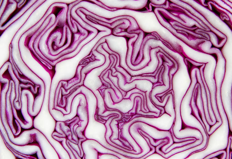 Closeup of a red cabbage sliced ​​in half. Closeup of a fresh red cabbage sliced ​​in half stock photo