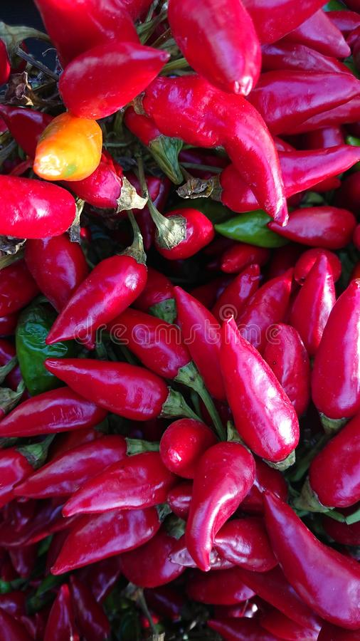 Red Hot Chilly Peppers. Closeup of Red Hot Chilly Peppers. Hot Chilli royalty free stock photo