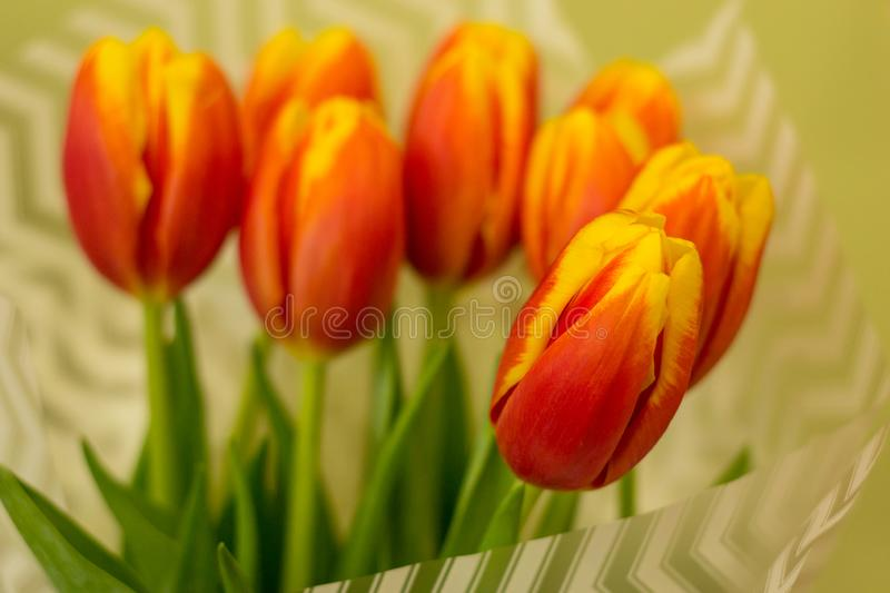Closeup red tulip on blurred bouquet background in wrapper. Concept of gift, spring, freshness, tenderness, love, relations. stock image