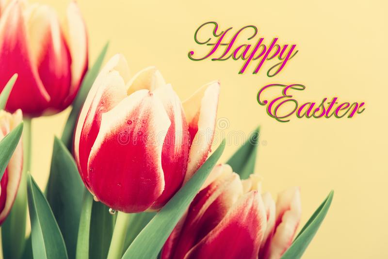 Closeup of red and yellow tulips with Happy Easter text royalty free stock photos