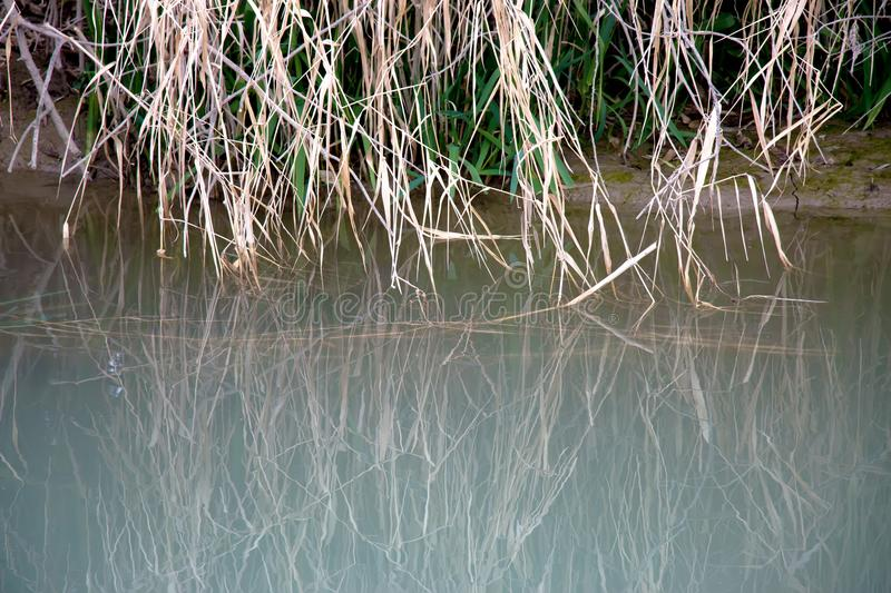 Background of river water royalty free stock photos