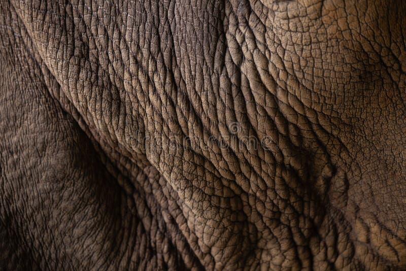 Closeup Rhinoceros Animal Skin. Wrinkle texture royalty free stock photos