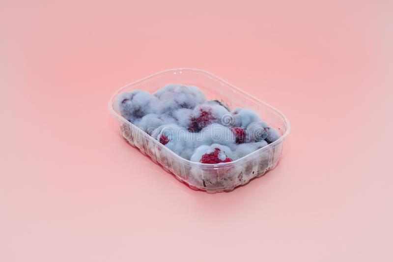 Closeup of rotten moldy raspberry in plastic box  on pink royalty free stock photos