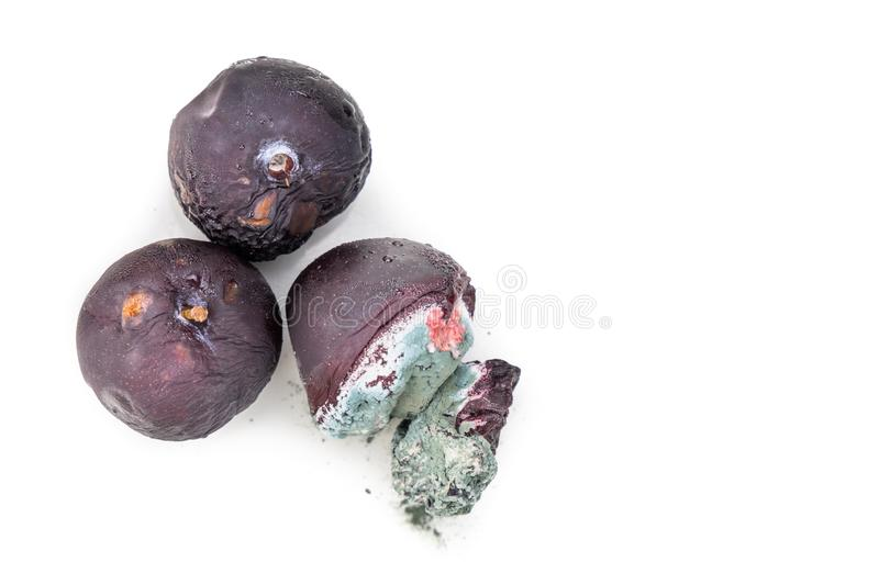Closeup on rotten and moldy red plum fruits stock images