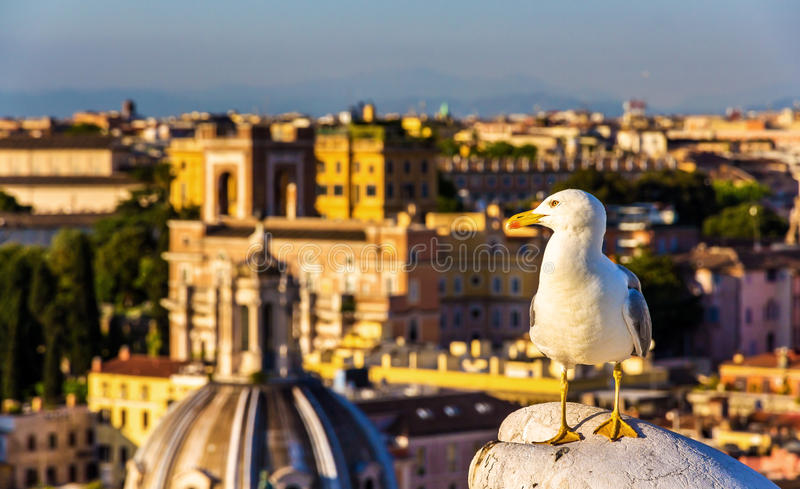 Closeup of a seagull with Rome city centre as background stock image