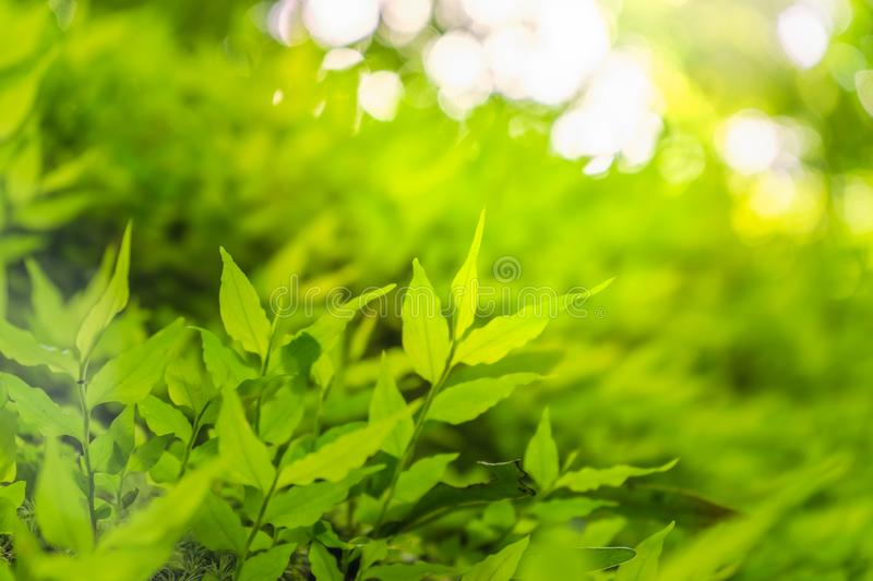 Closeup selective focus of beautiful green leaves on blurred greenery background in garden with copy space. Green lush nature view royalty free stock images