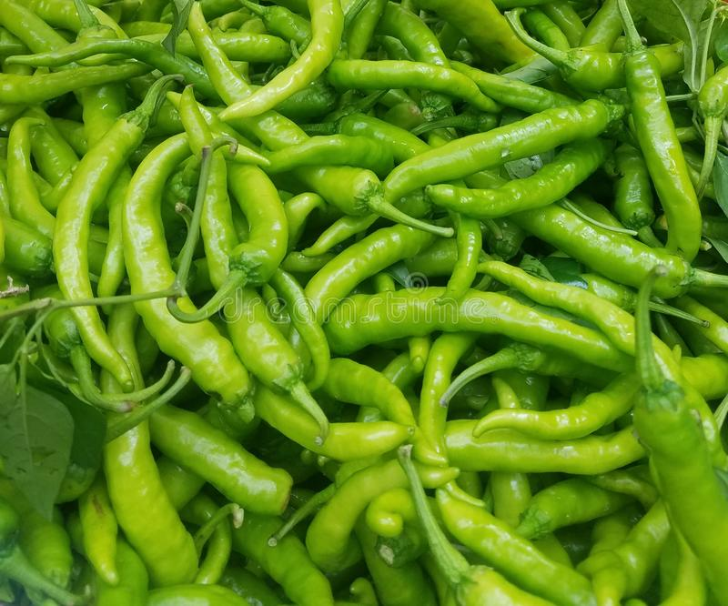Closeup shishito peppers at farmer`s market, in natural light stock image
