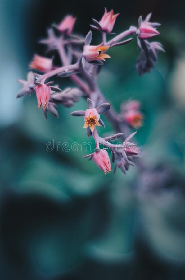 Closeup shot of a beautiful domestic plant branch royalty free stock photos