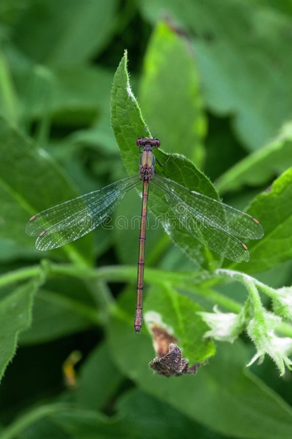 Closeup shot of a beautiful dragonfly and a leaf with the plants in the background. A closeup shot of a beautiful dragonfly and a leaf with the plants in the stock photos