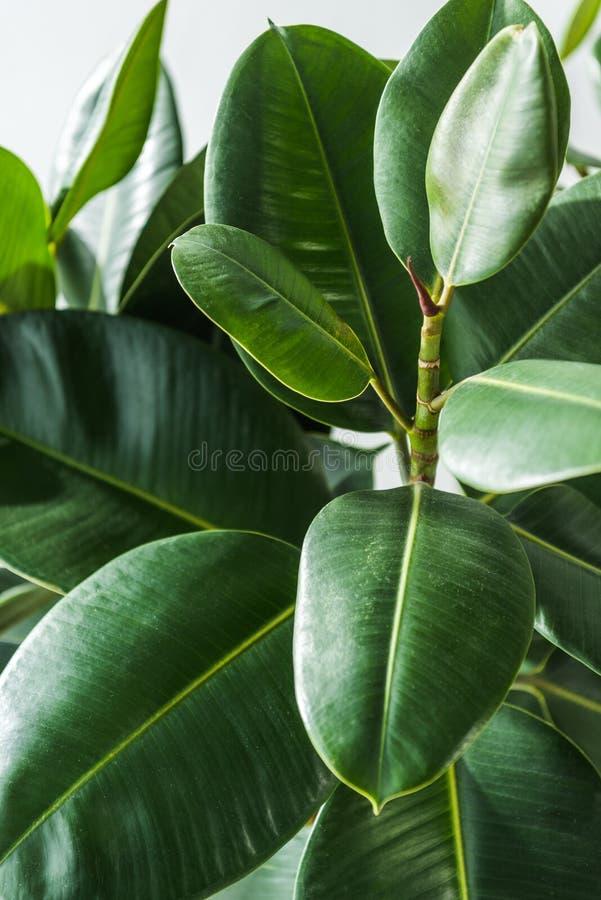 Closeup shot of a beautiful green house royalty free stock image