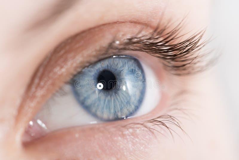 Closeup shot of a beautiful woman eye stock photo