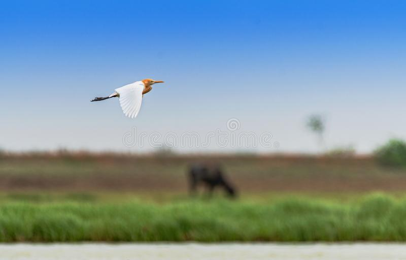Closeup shot of a bird flying with a blurred background, great for a background or a blog royalty free stock photo
