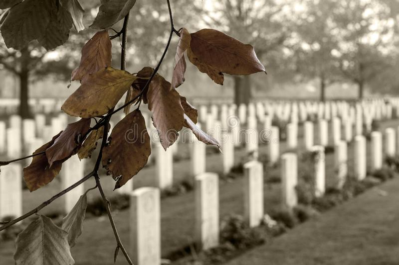 Closeup shot of a branch with autumn leaves in the Canadian War Cemetery in Groesbeek royalty free stock photography