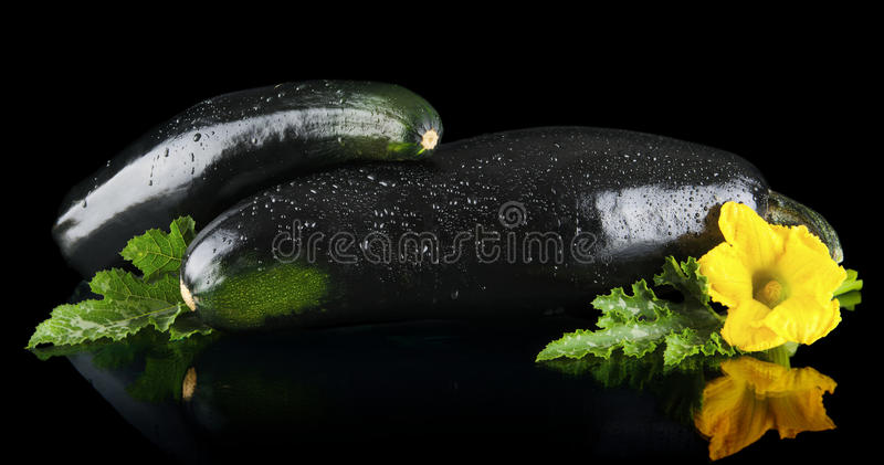 Closeup shot dewed courgettes with flowers on black background. Closeup shot of two dewed courgettes with flowers on black background royalty free stock photos