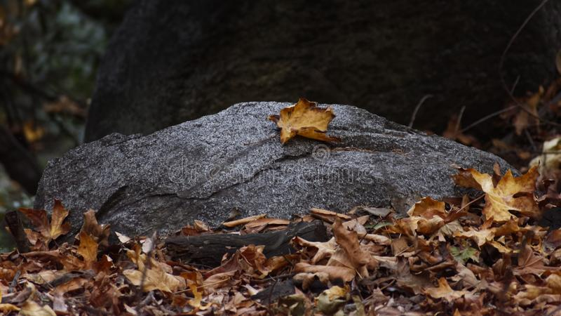 Closeup shot of fallen dry autumn leaves on a stone. A closeup shot of fallen dry autumn leaves on a stone stock photo