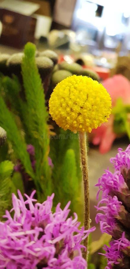 Closeup shot of a flower stock photos