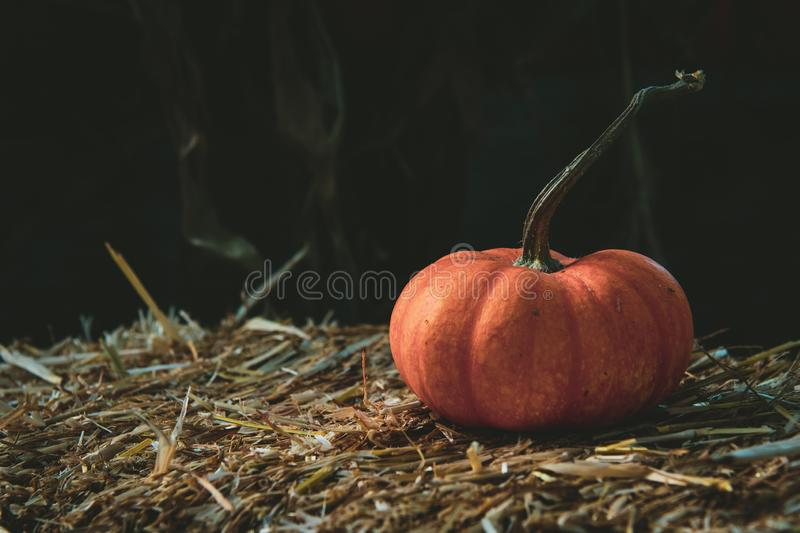 Closeup shot of a fresh pumpkin on dry grass royalty free stock photography